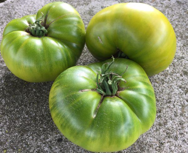 Tasty Evergreen Tomato