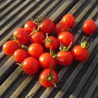Be My Baby Tomato